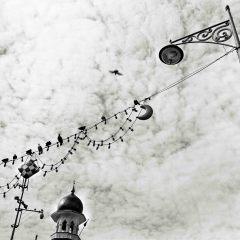 Bird, Penang, MalaysiaRolleiflex Planar
