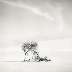 Walk on the Dunes
