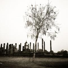 Tree, Sukhothai, Thailand