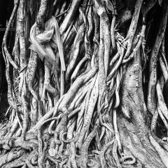 Roots, Bangkok, Thailandrolleiflex planar