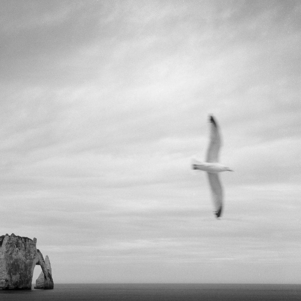 Seagull, Etretat, France Rolleiflex Planar