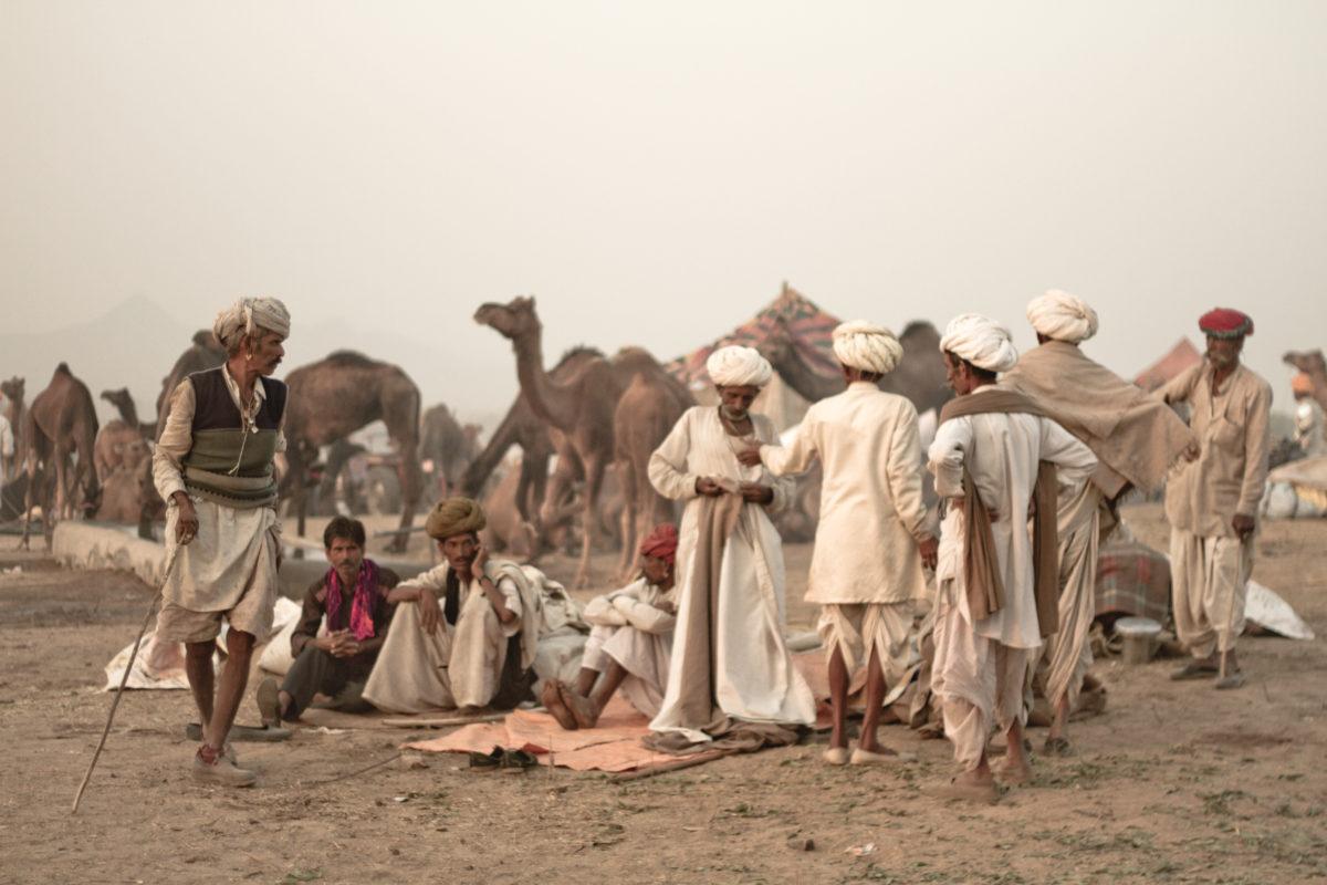 camel fair festival pushkar