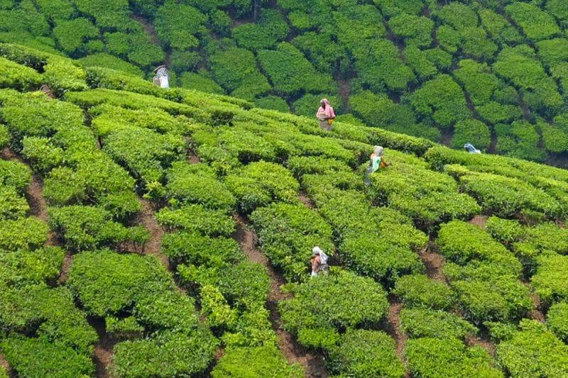 Photograph Kerala